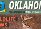 Options Offered to Landowners Dealing with Coyotes